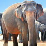 Een rondreis door Sri Lanka
